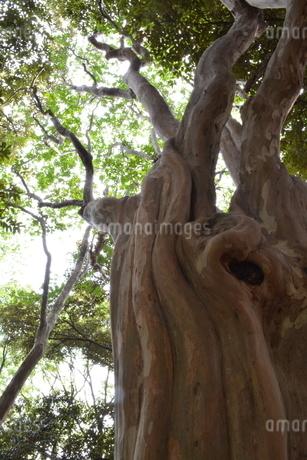 木の写真素材 [FYI03414173]
