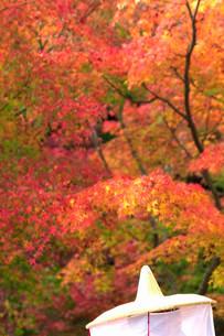 秋の紅葉の写真素材 [FYI03414555]