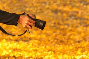 落ち葉の秋を撮るの写真素材 [FYI03414556]