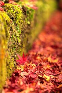 苔むす秋の写真素材 [FYI03414602]