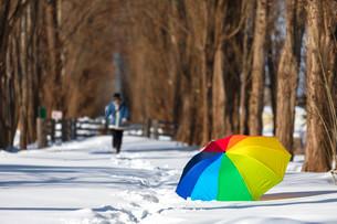 北大ポプラ並木の冬の写真素材 [FYI03414617]