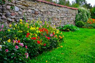 エストニア・北部にある18世紀の建物でエストニアで最も早く修復された領主の館のパルムセの館(現在は公園の情報センターや博物館として使用)庭園に作られたダリア咲く花壇の写真素材 [FYI03414650]