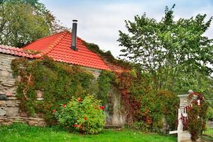 エストニア・北部にある18世紀の建物でエストニアで最も早く修復された領主の館のパルムセの館(現在は公園の情報センターや博物館として使用)敷地内に植えられたバラの木の写真素材 [FYI03414654]