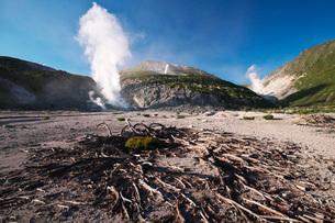 硫黄山とハイマツの枯れ木の写真素材 [FYI03414737]