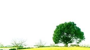 公園の木の写真素材 [FYI03414766]