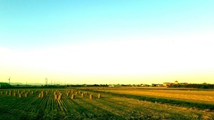 収穫後の風景の写真素材 [FYI03414768]