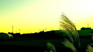 すすき 夕景の写真素材 [FYI03414773]
