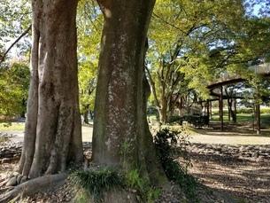 森林の写真素材 [FYI03414814]