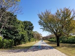 公園の写真素材 [FYI03414818]