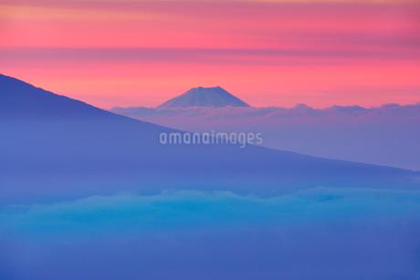 伊那丸富士見台から望む朝焼けの富士山と雲海の写真素材 [FYI03415049]