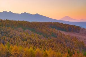 朝の紅葉のカラマツ林と八ケ岳と富士山の写真素材 [FYI03415056]