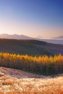 朝の紅葉のカラマツ林と八ケ岳と富士山遠望の写真素材 [FYI03415061]