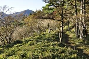 八丁坂ノ頭より蛭ヶ岳の写真素材 [FYI03415149]
