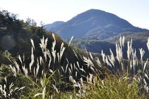 袖平山のススキと蛭ヶ岳の写真素材 [FYI03415198]