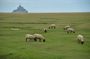モンサンミッシェルと羊の写真素材 [FYI03415216]