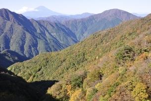 秋の丹沢山地と富士山の写真素材 [FYI03415235]