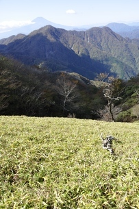 蛭ヶ岳笹原と西丹沢と富士山の写真素材 [FYI03415281]