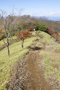秋色の丹沢主脈樹走路の写真素材 [FYI03415301]