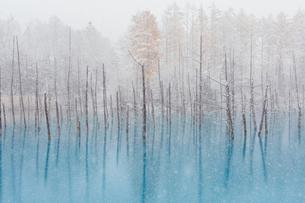 冬の青い池の写真素材 [FYI03415433]
