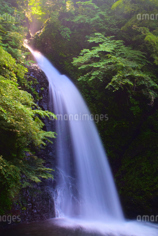 大仙の滝の写真素材 [FYI03415484]