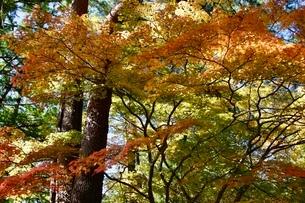高野山 紅葉の写真素材 [FYI03415614]