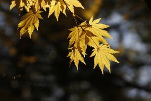 高野山 紅葉の写真素材 [FYI03415615]