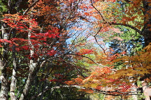 高野山 紅葉の写真素材 [FYI03415616]