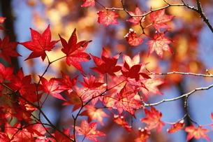 高野山 紅葉の写真素材 [FYI03415618]