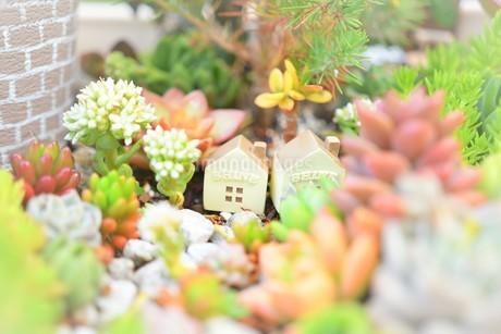 多肉植物の箱庭の写真素材 [FYI03415768]