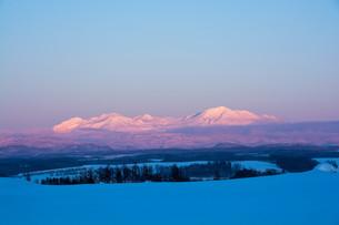 夕映えの雪山 大雪山の写真素材 [FYI03415828]