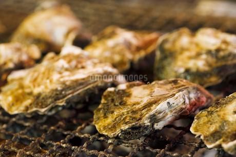 焼き牡蠣の写真素材 [FYI03415932]