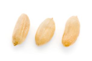 ピーナッツの写真素材 [FYI03415957]