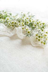 白いレースの上に置かれた白いワックスフラワーの花の写真素材 [FYI03416043]