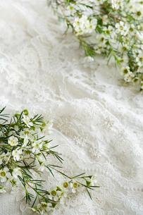 白いレースの上に置かれた白いワックスフラワーの花の写真素材 [FYI03416045]