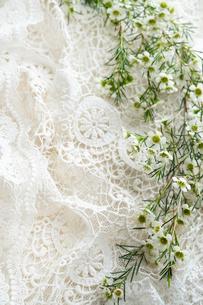 白いレースの上に置かれた白いワックスフラワーの花の写真素材 [FYI03416047]