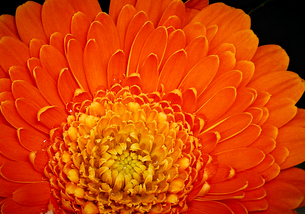 花の写真素材 [FYI03416118]