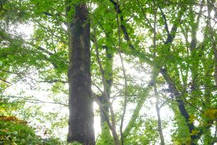 木漏れ日の写真素材 [FYI03416122]