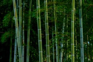 竹林の写真素材 [FYI03416132]