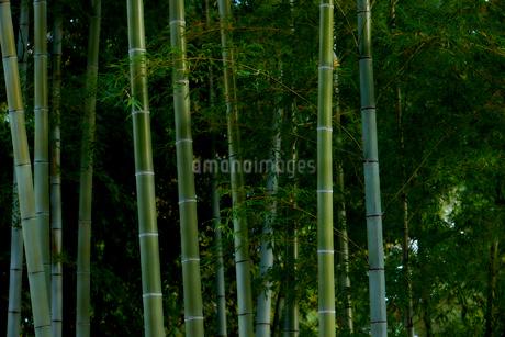 竹林の写真素材 [FYI03416133]