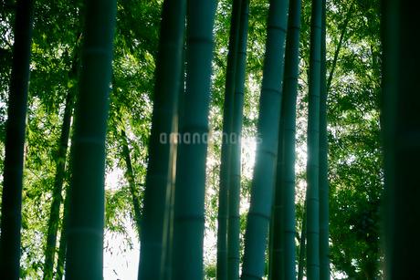 竹林の写真素材 [FYI03416135]