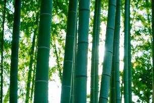 竹林の写真素材 [FYI03416136]