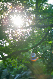 木漏れ日の写真素材 [FYI03416137]