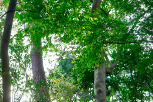 木々の写真素材 [FYI03416138]