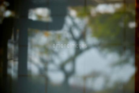窓ガラスの反射と障子の写真素材 [FYI03416140]