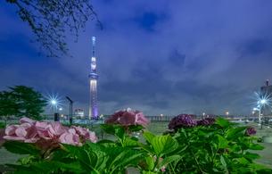 隅田川 日本 東京都 中央区の写真素材 [FYI03416432]