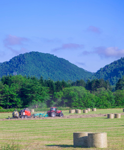 北海道 自然 風景 牧草地の写真素材 [FYI03416449]