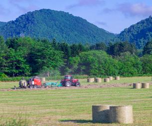 北海道 自然 風景 牧草地の写真素材 [FYI03416450]