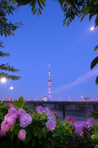 隅田川 日本 東京都 中央区の写真素材 [FYI03416454]