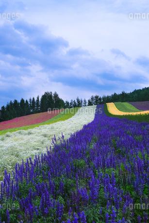 富良野市 日本 北海道 富良野市の写真素材 [FYI03416458]
