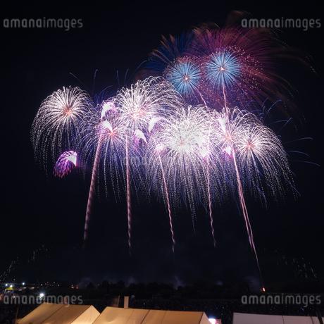常総きぬ川花火大会 日本 茨城県 常総市の写真素材 [FYI03416466]